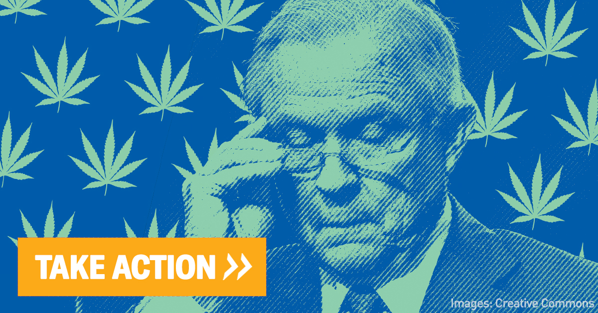 Picture of Jeff Sessions on blue background with green marijuana leaves around him